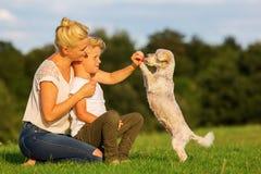 有使用与一条小狗的儿子的母亲 免版税库存照片