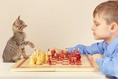 有俏丽的小猫的小高段棋手下棋 免版税库存照片