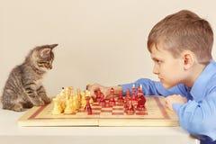 有俏丽的小猫的年轻高段棋手下棋 库存图片