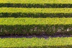 有修剪的花园的整洁的公园种植光滑的线 免版税图库摄影