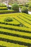 有修剪的花园的整洁的公园种植光滑的线 免版税库存照片
