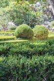 有修剪的花园的整洁的公园种植光滑的线 免版税库存图片