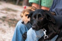 有偎依由膝盖决定的两条可爱的狗的人 免版税图库摄影