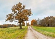 有偏僻的橡树的,欧洲乡下路 免版税库存图片