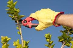 庭院工作修剪树篱天空背景 免版税库存图片