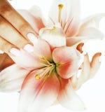 有停滞花百合关闭的修指甲的秀丽精美手 库存照片