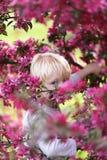 有偷看通过桃红色Crabapple T的明亮的蓝眼睛的孩子 免版税库存图片