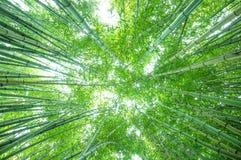 有光彩的早晨阳光的华丽竹森林 图库摄影