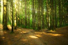 有光的森林 免版税库存照片