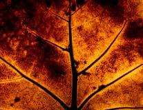 有光的秋天叶子后边从关闭 库存图片