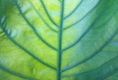 有光的绿色叶子在反射后 库存图片