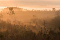 有光的绿色森林在早晨 免版税库存图片