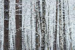 有光秃的树的冬天森林与雪 免版税库存图片