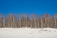 有光秃的树的桦树树丛在多雪的小山,反对明亮的蓝天 库存照片