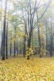 有光秃的秋季树的城市公园和在雾的下落的叶子 图库摄影