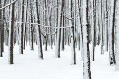 有光秃的雪报道的树干和分支的冬天森林 库存图片