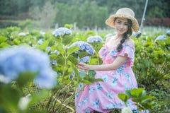 有八仙花属花的领域的美女 库存图片