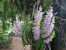有兰花的植物园 库存照片