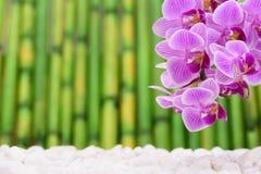 有兰花花和竹子的日本禅宗庭院 免版税库存照片
