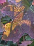有典型的秋天颜色的叶子 叶子发光与阳光我 库存图片