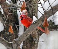 有冬天帽子的主教 库存照片