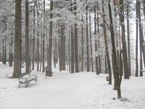 有冰和雪首饰的冻森林 免版税库存照片