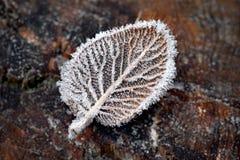 有冰晶的叶子 免版税库存图片