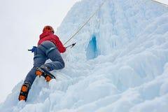 有冰的登山家妇女用工具加工在攀登一l的橙色盔甲的轴 免版税库存照片