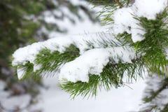 有冷杉木的冬天妙境 圣诞节与降雪的问候概念 库存照片