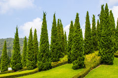 有冷杉木的庭院 库存照片