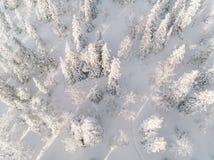 有冷淡的树的冬天森林,鸟瞰图 芬兰 免版税库存照片