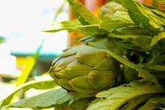 有准备好的叶子的新绿色朝鲜蓟头状花序烹调se 免版税库存图片