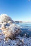 有几棵多雪的树的冻在边的池塘和芦苇 免版税库存图片