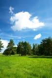 有几棵树的夏天草甸在背景和多云天空中 库存照片