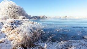 有几棵树的冻在边的池塘和芦苇 免版税图库摄影