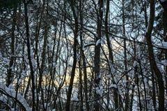 有分支和树的冬天森林在雪下 库存照片