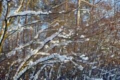 有分支和树的冬天森林在雪下 免版税库存图片