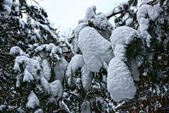 有分支和树的冬天森林在雪下 图库摄影