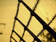 有刺的篱芭,在秋天日落的蜘蛛网 库存图片
