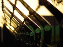有刺的篱芭,在秋天日落的蜘蛛网 免版税库存照片