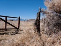 有刺的范围被缠结的风滚草上升电汇 库存照片