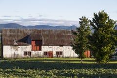 有削皮油漆和金属屋顶的木谷仓在奥尔良海岛  免版税库存图片