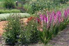 有剑兰、百日菊属和大丽花电灯泡的夏天花圃 图库摄影