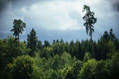 有剧烈的天空的密集的森林 免版税库存照片