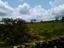 有动物的草原 免版税库存图片