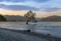 有单独树的New Zealand Wanaka湖在日落期间 免版税库存图片