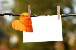有卡片的秋天叶子 库存照片