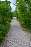 有卵石花纹的森林道路 免版税库存图片