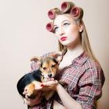 有卷发的人的性感的画报女孩在她的头和一条狗在她的查寻在轻的拷贝空间的胳膊 免版税图库摄影