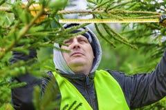 有卷尺的人在云杉的分支附近在森林里 免版税库存图片